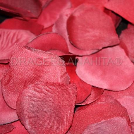 Pétales de rose bordeaux et blanche